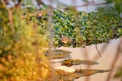 Vatten och fågel arkivbild