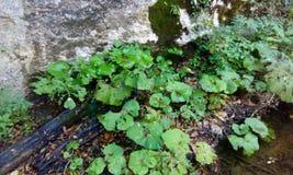 Vatten och gräs Arkivfoton