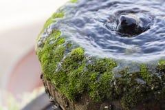 Vatten och gräsplanmossa arkivbild
