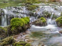 Vatten och mossa Arkivbilder