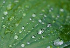 Vatten och regn tappar på bladet, abstrakt begreppsikten, droppar av regn på grön bakgrund/droppar på tjänstledigheter efter regn Arkivbilder