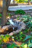 Vatten och stenar i parkera royaltyfria bilder