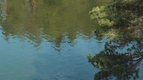 Vatten skvalpar på floden Reflexion av träd i den härliga sjön arkivfilmer
