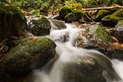 Vatten som över flödar, vaggar på ett Little Falls Royaltyfri Fotografi