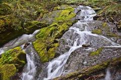 Vatten som flödar över mossigt, vaggar royaltyfri bild