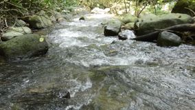 Vatten som flödar ner på starr i floden lager videofilmer