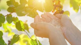 Vatten som häller i kvinnlighänder på naturbakgrund, ekologibegrepp