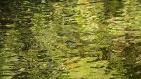Vatten som körs till och med flodslag, vaggar gör krusigt i skog arkivfilmer