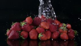 Vatten som plaskar på nya jordgubbar stock video