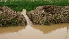 Vatten som spiller in i jordbruksmark arkivfilmer