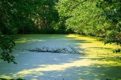 Vatten som täckas av lemnaen Arkivbild