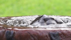 Vatten svaller ut från en konkret hink som en vår arkivfilmer