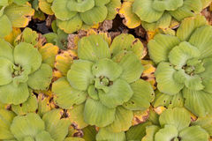 vatten- tät växt Royaltyfria Foton