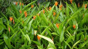 Vatten tappar att bevattna blommor Droppar av vatten bevattnar grön tropisk lövverk med blommor lager videofilmer
