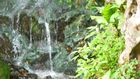 Vatten tappar flodberget stock video