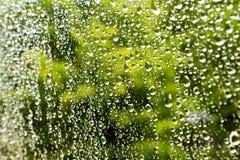 Vatten tappar på det glass fönstret med grunt djup av fältet och den selektiva fokusen Arkivfoto