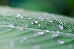 Vatten tappar på ett blad efter regnet Royaltyfria Foton