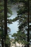 Vatten till och med träden Royaltyfri Foto