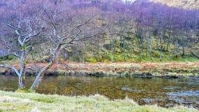 Vatten till och med vildmarken Royaltyfria Bilder