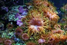 Vatten-värld Coral Garden royaltyfri foto