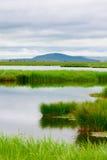 Vatten- växter Fotografering för Bildbyråer