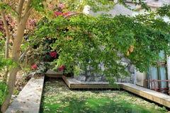Vatten- växter Royaltyfri Fotografi