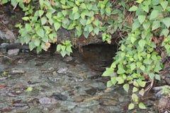 Vatten- växter near vattenfallet Royaltyfria Bilder