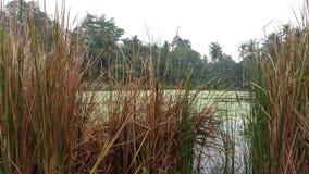 Vatten- växter som svävar på dammet royaltyfri bild
