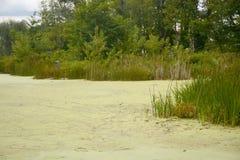 Vatten- vegetation Fotografering för Bildbyråer