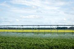 Vattenbevattningsystem som besprutar vatten över skörd i sommar Royaltyfria Bilder