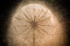 Vattenboll Arkivfoto