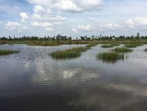 Vattenbruksystem, omfattande lantgård för tigerräkakultur Arkivbild