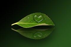Vattendroppar för hjärta I Royaltyfria Bilder