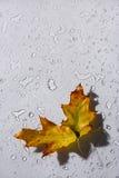 Vattendroppar och blad på exponeringsglas fotografering för bildbyråer