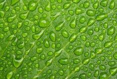 Vattendroppar på bladet Arkivfoton