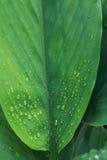 Vattendroppar på bladgräsplan Royaltyfri Foto