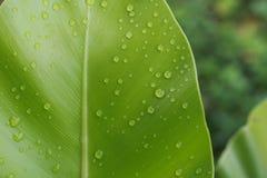 Vattendroppar på bladgräsplan arkivbild