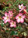 Vattendroppar på blommor Arkivfoton