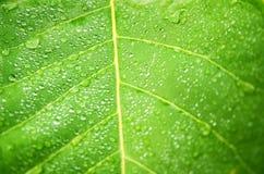Vattendroppar på det gröna bladet Arkivbild