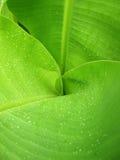 Vattendroppar på en banan lämnar bakgrund Arkivbild
