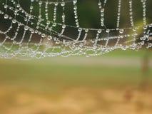 Vattendroppar på en spindelrengöringsduk Arkivbilder