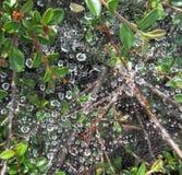 Vattendroppar på en spindelrengöringsduk Royaltyfri Fotografi