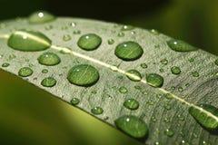 Vattendroppar på ett blad Royaltyfri Fotografi