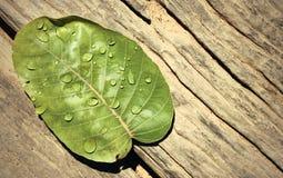 Vattendroppar på leaves Royaltyfri Bild