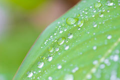 Vattendroppar på trädbladet Arkivfoton