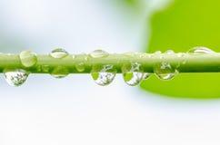 Vattendroppar på trädfilialen Arkivbild
