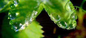 Vattendroppar på växt Arkivbild