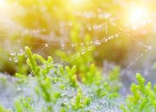 Vattendroppar på växt Royaltyfria Foton