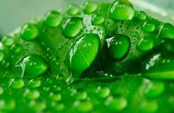 Vattendroppe i mörker - grönt blad Arkivfoton