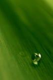 Vattendroppe på den gröna leafen Royaltyfri Bild